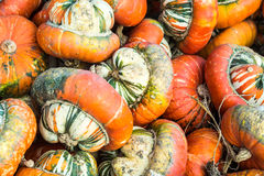 Turban squashes. A pile of turban  pumpkins Royalty Free Stock Photography