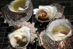 Turban Top Shell. Steaming turban top shell on a grill Royalty Free Stock Photo