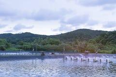 Turbina de la aireación del agua en el cultivo acuático Negocio del criadero del camarón y de los pescados Imagen de archivo