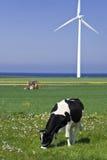 Turbina de la vaca y de viento imágenes de archivo libres de regalías