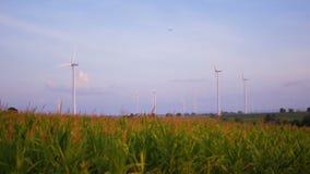 Turbina de viento ascendente cercana en campo de maíz con el cielo azul almacen de video
