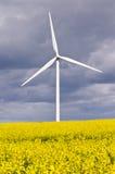 Turbina di vento con il seme di ravizzone Immagini Stock Libere da Diritti