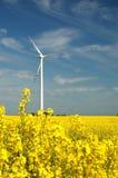 Turbina di vento sul campo del colza oleifero Immagini Stock