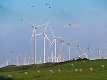 Turbina eólica e pássaros Fotos de Stock Royalty Free
