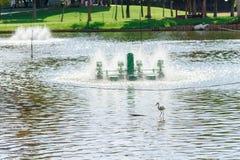 Turbina y pájaro del agua en la charca tailandia Foto de archivo