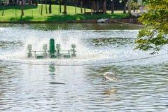 Turbina y pájaro del agua en la charca tailandia Fotografía de archivo