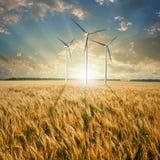 Turbinas de los generadores de viento en campo de trigo Foto de archivo libre de regalías
