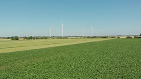 Turbinas de vento, campo amarelo video estoque