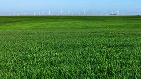 Turbinas de vento, campo amarelo Imagens de Stock Royalty Free