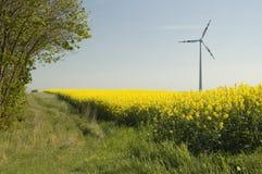 Turbinas de vento e fie do rapeseed imagem de stock