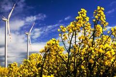 Turbinas de vento no campo de flores da violação Fotografia de Stock Royalty Free