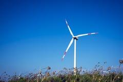 Turbinas de vento no campo verde Fotos de Stock