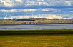 Turbinas de viento, campo amarillo Imagen de archivo