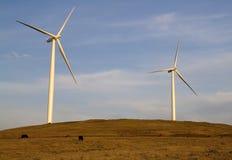 Turbinas de viento con las vacas Imágenes de archivo libres de regalías