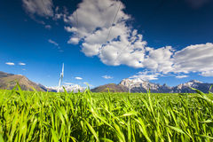 Turbinas de viento eléctrico en el campo del trigo de invierno en las montañas Imágenes de archivo libres de regalías