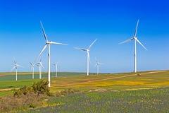 Turbinas de viento en campos florecientes en la primavera, Suráfrica Fotos de archivo libres de regalías