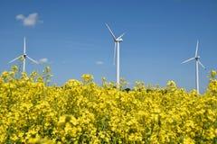 Turbinas de viento en un campo de las plantas de la rabina Fotos de archivo libres de regalías