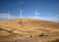 Turbinas de viento en una colina con las vacas Foto de archivo libre de regalías