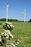 Turbinas de viento y flor agradable Fotografía de archivo