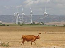 Turbinas de viento y toros del paisaje Imagen de archivo libre de regalías