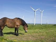 Turbinas do cavalo e de vento Fotografia de Stock