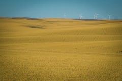Turbinas eólicas, campos de trigo, estado de Washington imagem de stock