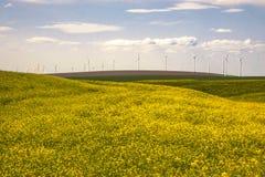 Turbinas eólicas em um campo de flores amarelas Foto de Stock