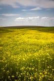 Turbinas eólicas em um campo de flores amarelas Fotos de Stock Royalty Free