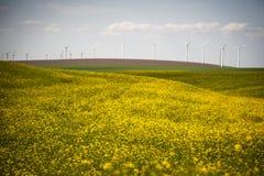 Turbinas eólicas em um campo de flores amarelas Imagens de Stock
