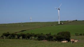 turbinas eólicas 4K no céu azul com as vacas no primeiro plano Reino Unido filme