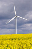 Turbine de vent avec la graine de colza Images libres de droits