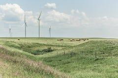 Turbine di vento, campo giallo Immagini Stock