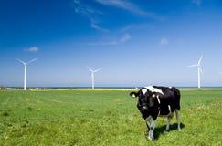 Turbine di vento e della mucca. Fotografia Stock