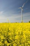 Turbine di vento e fie del seme di ravizzone Immagini Stock