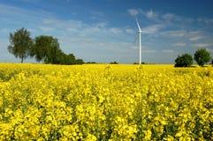 Turbine di vento sul campo del colza oleifero Fotografie Stock Libere da Diritti
