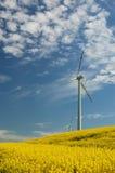 Turbine di vento sul campo del colza oleifero Immagini Stock