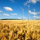 Turbiner för vindgeneratorer på vetefält Arkivbild