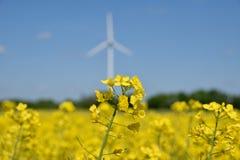 Turbines de vent dans un domaine des usines de graine de colza Photos libres de droits