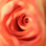 Turbinio della Rosa Fotografie Stock