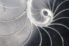 Turbinio nero Shell Texture Fotografie Stock