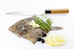 Turbot Royalty Free Stock Photos