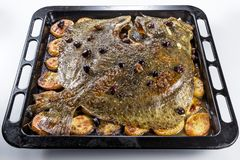 Turbot fish in baking pan oven with potatoes olives and aromatic royalty free stock image