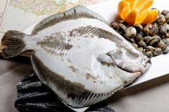 Turbot fish and clams Royalty Free Stock Photo