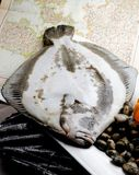 Turbot fish and clams Stock Images