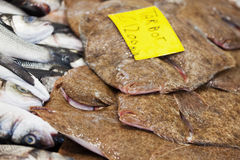 Turbot at the market Stock Photos