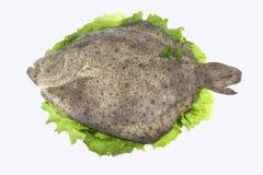 Turbot (peixes) Fotos de Stock