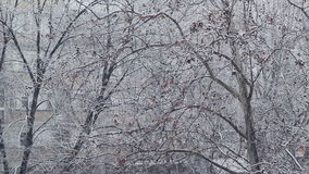 Turbulent snowfall detail in the tree park as winter season weather background stock footage