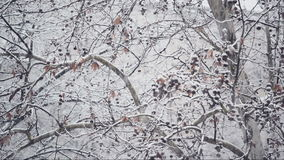 Turbulent snowfall detail in the tree park as winter season weather background stock video
