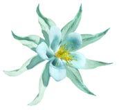 Turchese del fiore Isolato su una priorità bassa bianca con il percorso di residuo della potatura meccanica Nessun ombre closeup  Fotografia Stock