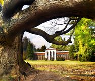 Turcianska Stiavnicka - Massive tree and Arboretum Royalty Free Stock Photography